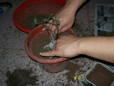 三年·移植小树 - 碧水盈盈 - 碧水长流