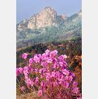语丝(九) - 青青茉莉花 - 保护自然.崇尚真理.热爱生活