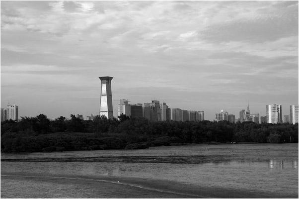 [原]深圳有个红树林 - Tarzan - 走过大地