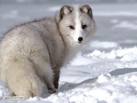 引用 拍摄难度极高的动物 - 子寒 - 子寒的博客