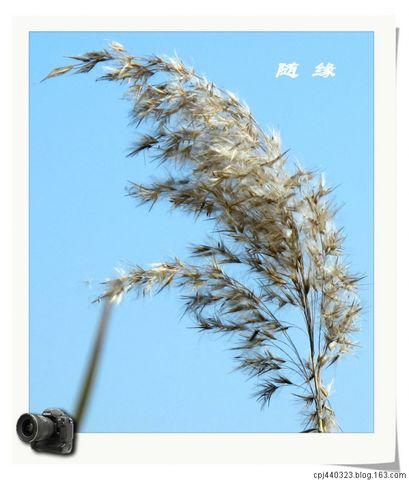 太湖湿地公园 - 随缘 - 相逢是缘,欢迎光临,愿大家万事如意!