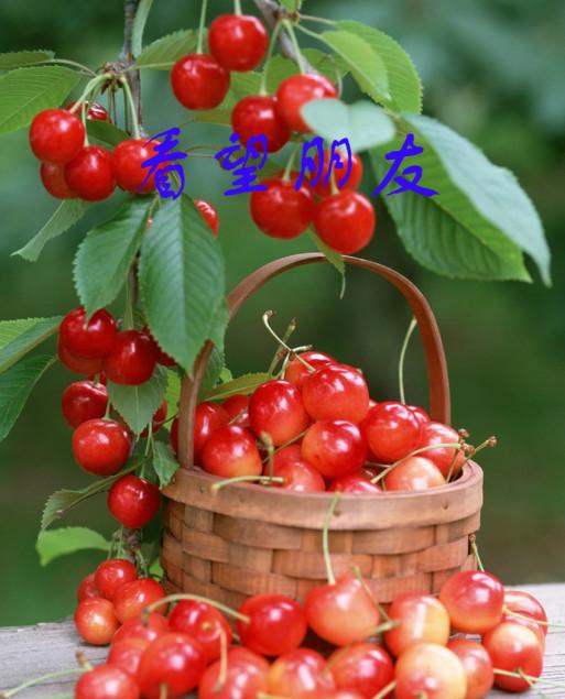 庆祝国际六一儿童节 - guohuachan - 青山绿水的博客