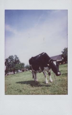 牛。 - 谈起我的SEE大调 -