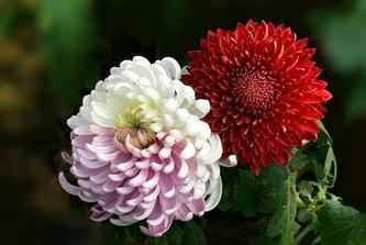2008年11月8日 花朵