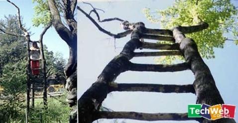 世界奇树 - 白雪无垠 - 叮当银舍