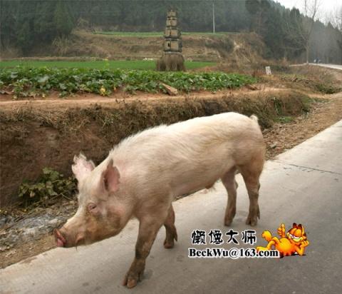重返四川灾区之旅12·为了承诺跑断腿儿(10图) - 懒馋大师 - 懒馋大师的猫样生活