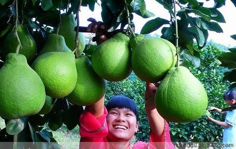 GPIT的增产原理和它的九大突破 - 江苏省丰谷种业有限公司 - 江苏省丰谷种业有限公司