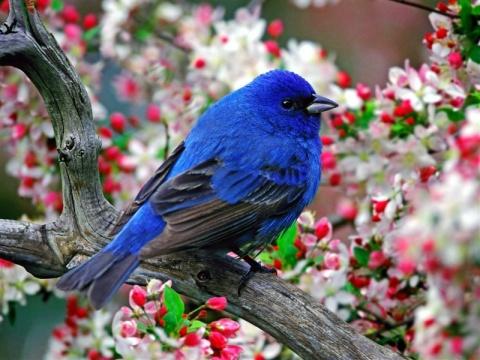 彩鸟 - 大河无边 - 我的博客