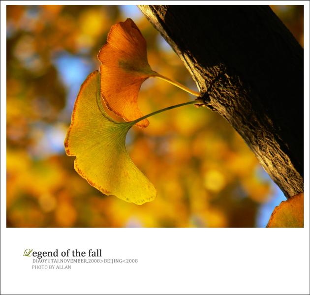 来年 - Allan -              瓦尔登湖的落叶