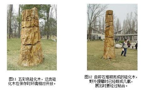 木化石【简介】 - 海阔堂翡翠木化石总汇 - 嗨!欢迎您光临《海阔堂》