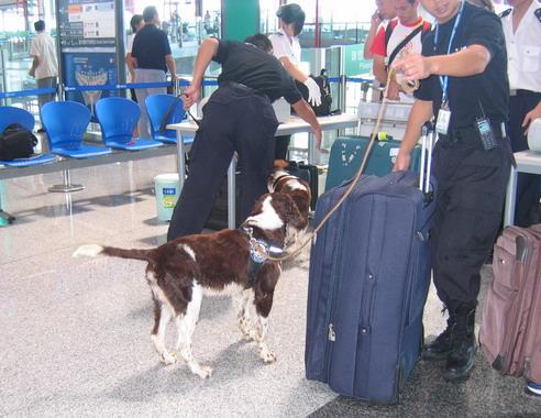 机场T3航站楼的两只狗狗 - 子非鱼 - 子非鱼