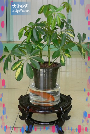 18种常见室内植物的功效 - 江南y一夜 - 岂能尽如人意,但求无愧吾心。