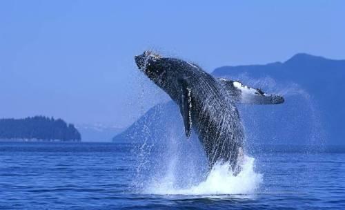 阿根廷的鲸鱼 (组图)(二) - 老藤 - tengxuyan 的博客