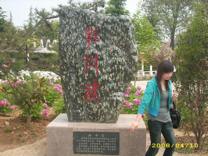 古都洛阳看牡丹 - 东方宗禾 - dongfangzonghe的博客
