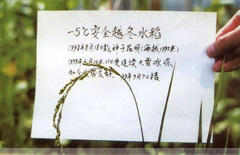那氏齐齐发遍地开花 - 江苏省丰谷种业有限公司 - 江苏省丰谷种业有限公司