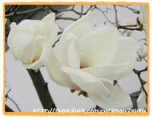 花开的春天 - 自由主妇 - 自由主妇