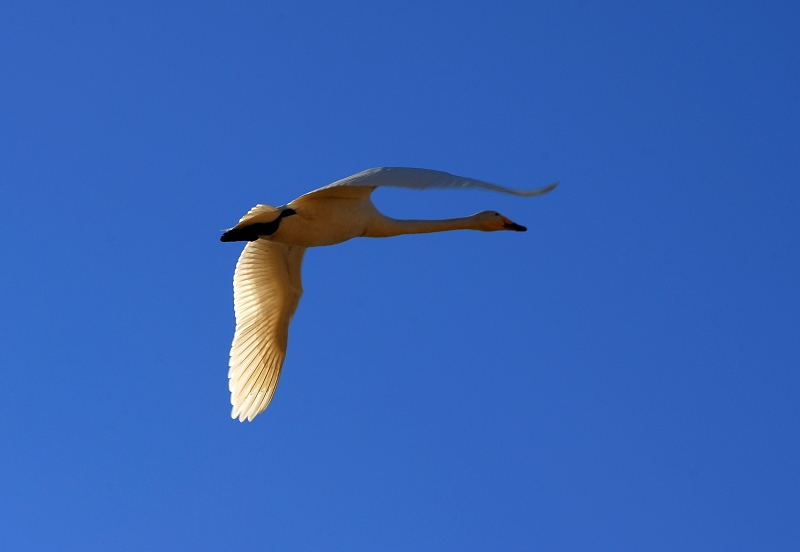 [原创摄影]长空比翼 - 无忌色影 - 行行摄摄