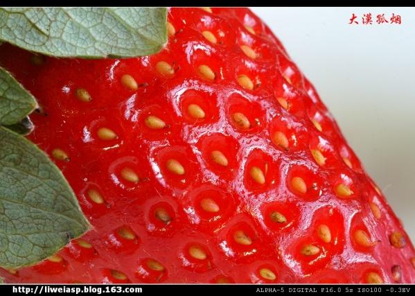 【摄影】冬日品草莓 - 大漠孤烟 - 大漠孤烟的博客