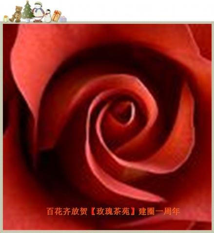 百花齐放 - 红叶风萧萧  - 红叶风萧萧