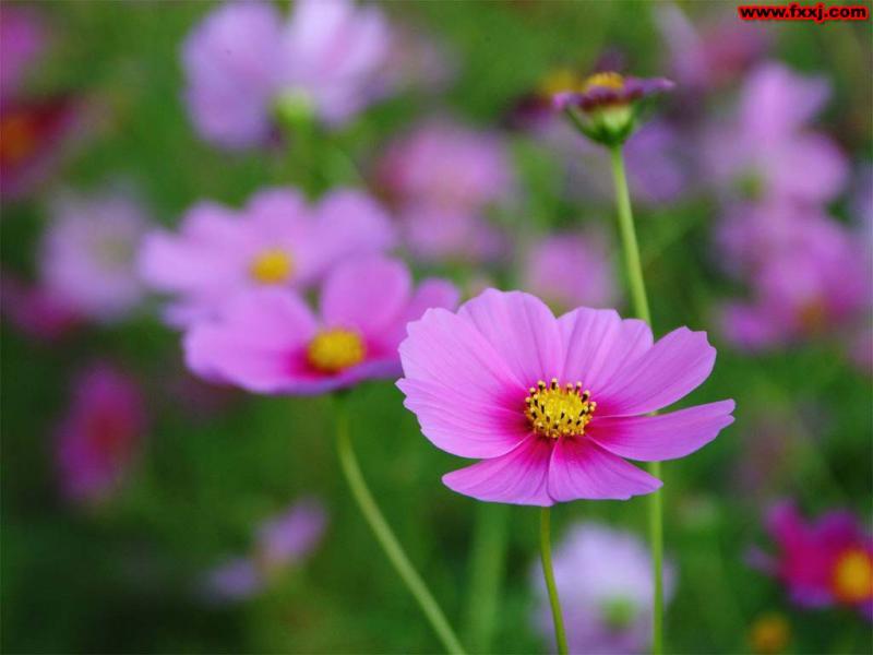引用 嫣紅姹紫  娇艳欲滴[图] - 梦回故乡 - 梦回故乡