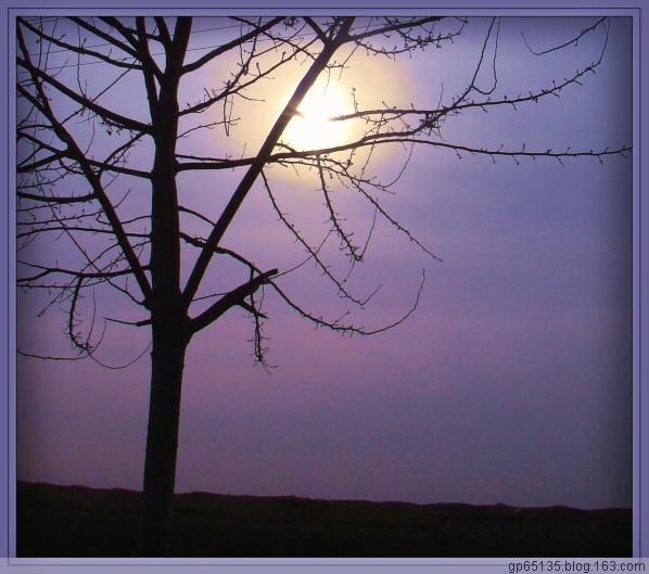 六月荷花摄影诗歌《会笑的太阳》(30) - 六月荷花 -  六 月 荷 塘