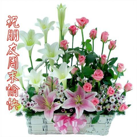 引用 网友 千朵玫瑰 - meilanzhuju - meilanzhuju的博客