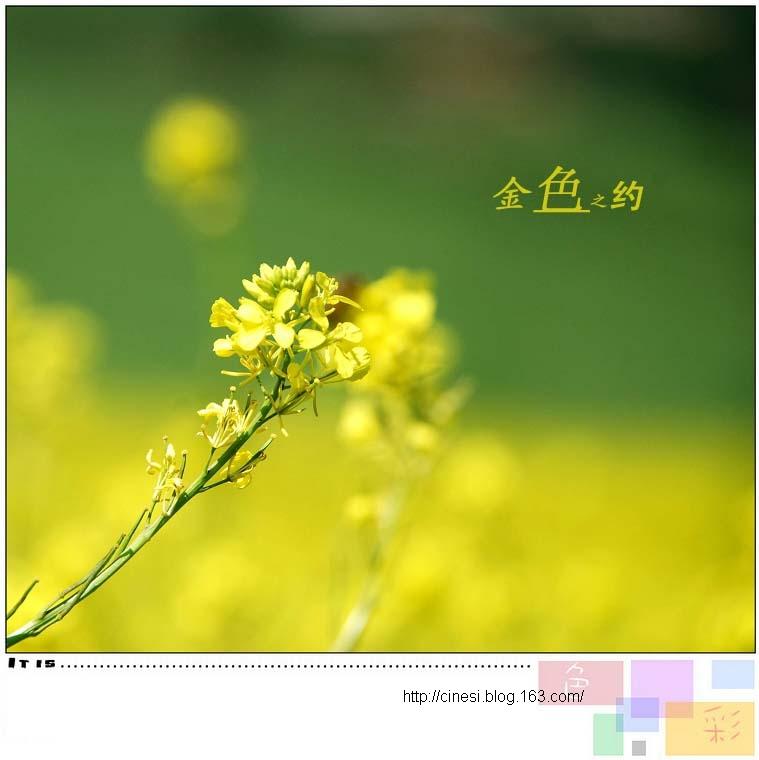 (原创16P)金色之约 - 风和日丽(和佬)  - 鹿西情结--和佬的博客