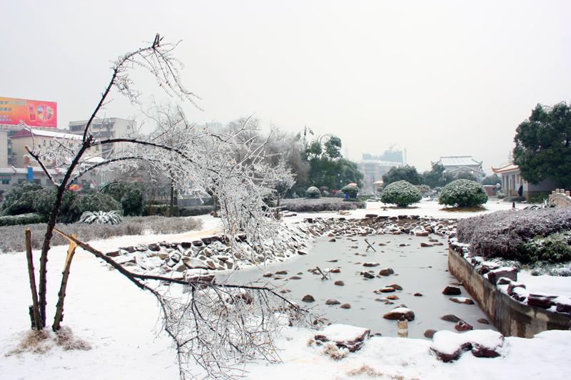 [原创]断树知多少——冰灾之一 - 歪树 - 歪树