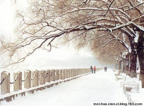 雪的假想 - 梅花仙子 - 欢迎来梅花仙子的博客