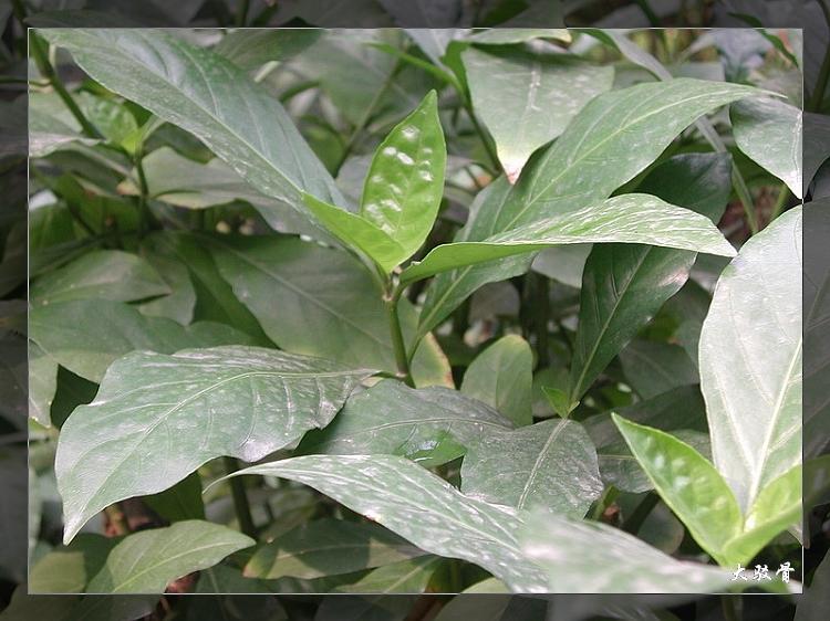植物精美图谱600种(五) - 香儿 - 香儿