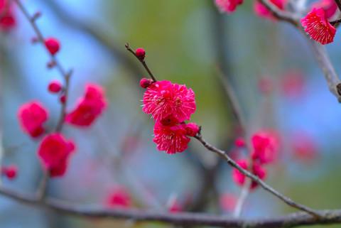 (收集)古诗妙句欣赏2 - 枫歌燕语 - 枫歌燕语的博客