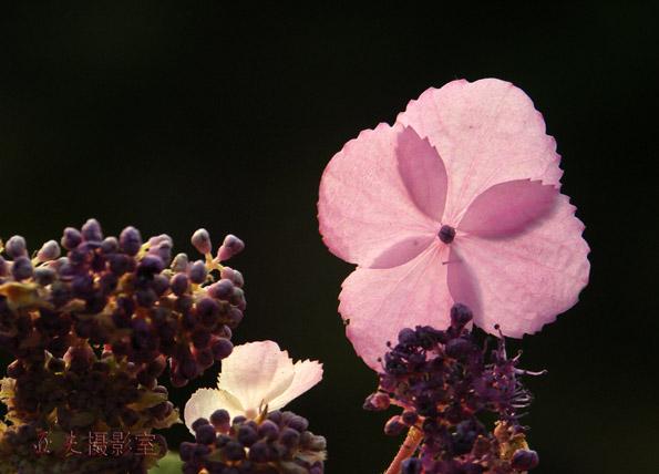 (原创)山花烂漫 - 高山长风 - 亚夫旅游摄影博客
