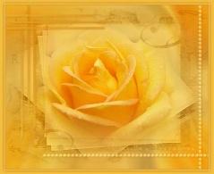 [原创]黄玫瑰 - 雪颜 - 雪颜的博客