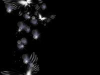 蝴蝶.黑色横条 - 香儿 - 香儿