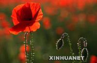 【转】6.26—国际禁毒日 - 海珠青协十班 - 海珠青协十班的博客