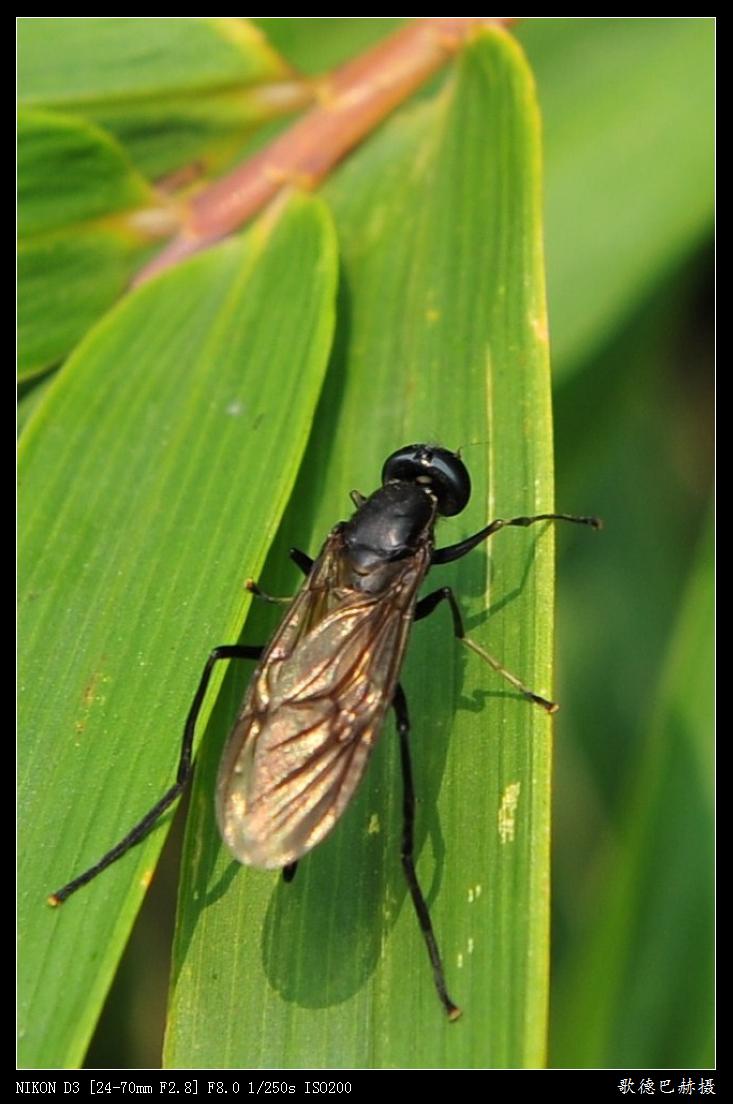 昆虫---原创 - 歌德巴赫 -                 歌德巴赫