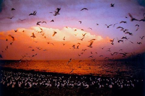我主编的《今日青海》画册 - 大海的博客*123 - 大海的博客*123