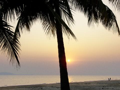 椰林黄昏  - daikang390505 - 我的博客
