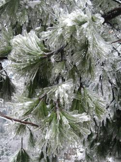 西岘峰雪景(3)——冰松蕉