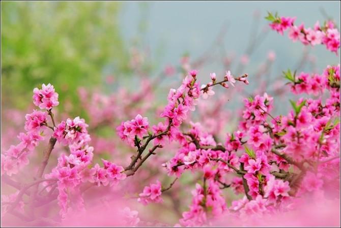 春暖花开 - 草根 - 草根馨园