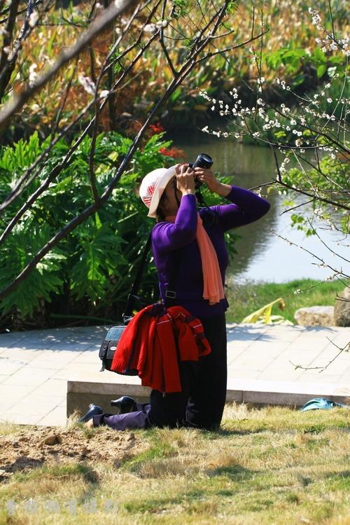 【原创摄影】广州萝岗香雪公园---梅园拾趣 - 曾经拥有 - 我的摄影花园