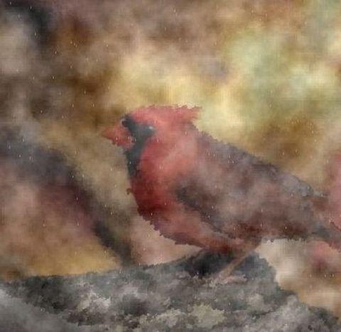 鸟 - ntqcd - 非诗人(凝视太阳的男人)古弦作品