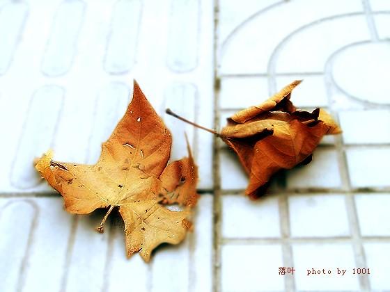【原创诗歌】最后一片叶子 - 稻香老农 - 稻香老农 欢迎您