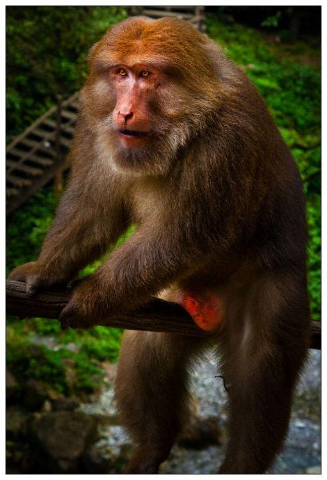 (原创) 峨眉山览胜——零距离接触美猴王 - 牛筋 - 牛筋的博客