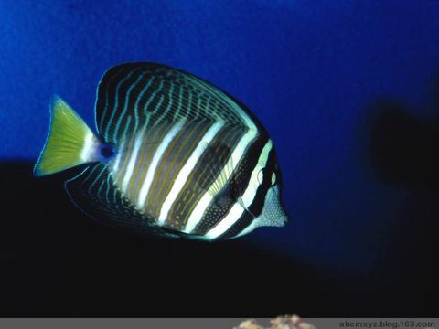 海和鱼(二) - 憨憨 - 寻春