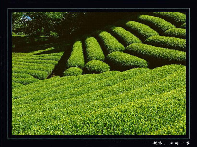 【转载】〔沧海作品〕美丽的田园风光 -  东方.旭 - 东方.旭的博客