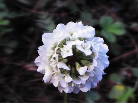又是春暖花开时(三)[摄影] - 李玉真 - 玉山真人的原创博客