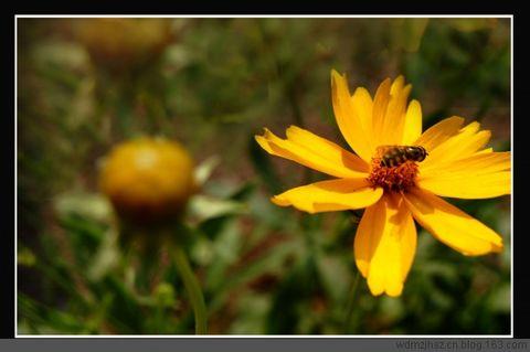 不起眼的小花——习作 - MOMO - MOMO 的博客