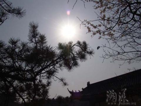 大悲寺的春天(组图) - 新佛教徒 - 正信之路