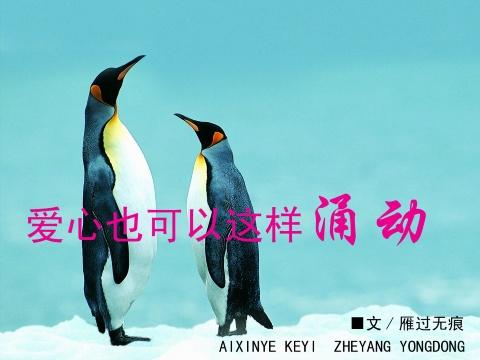【原创】爱心也可以这样涌动 - yang19740324 - 一只藏獒的博客